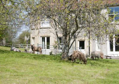 Godshill Park Farm 170414 11